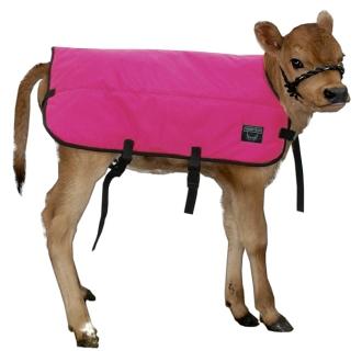 A pink Udder Tech calf blanket!