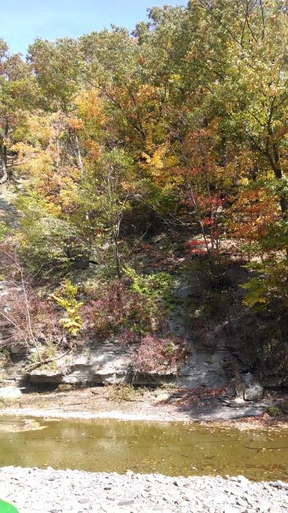 fall pic 5