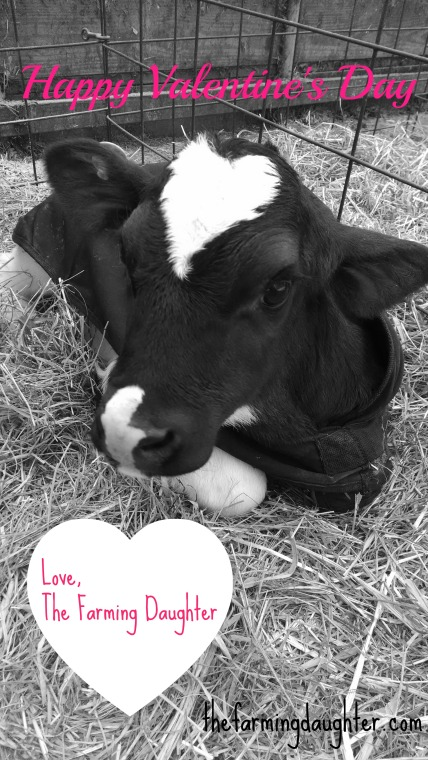 Happy Valentine's Day! Love, The Farming Daughter. https://thefarmingdaughter.com/