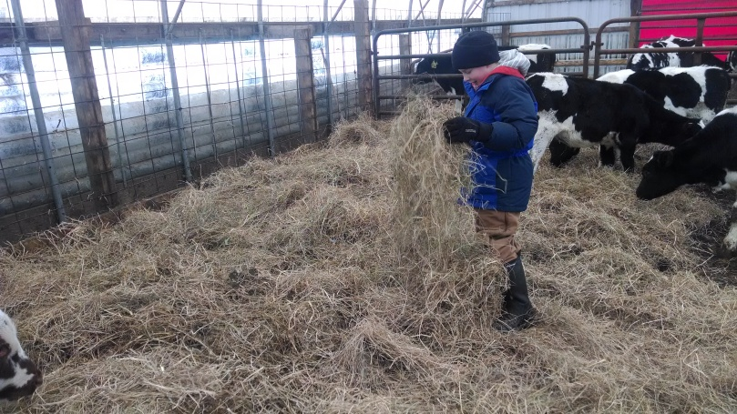 Caring for Cows in the Winter: Our calf group pens (https://thefarmingdaughter.com/2015/03/09/caring-for-cows-in-the-winter/)